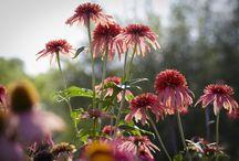 Beautiful Garden Flowers & Inspiration