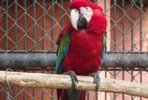 Aráras - Parque Zoobotânico de Teresina