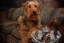I LOVE AIREDALES!