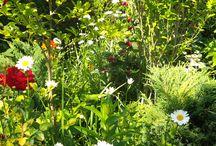 kwiatowy raj / to co lubie