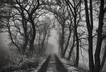 treeeeees / by JEANNE LAMBERT