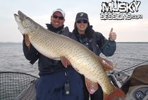 M U S K Y. S E S S I O N S / Musky fishing guide in Québec, Canada.  If you want to catch huge fish come see us!   Www.muskysessions.com Muskysessions@gmail.com