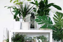 növényk