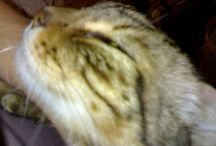 Chicco / Cat