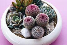 Cactus & Succulents