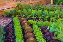 Sebze bahçesi