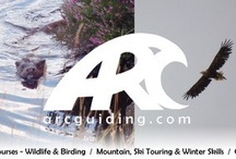 Arc Guiding  / My own guiding company, offering single to multi day guided trips in the Scottish Highlands. Discovering some of the best wildlife and landscapes in the world, by foot, canoe, bike or ski!