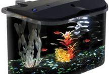 Aquariums / by Zhanna Denisyuk