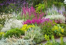 Low Water Plants / Here are some great plants that are very drought tolerant and require minimal water to thrive.