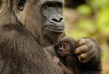 I love animals :) / by Melissa Lawler