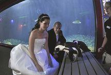 Aquarium Wedding/Reception / Weddings and receptions at aquariums.