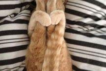AŞK / Kediler