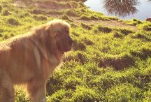 Pawsome Dog Posts / Doggy tips, advice and pupdates from BorrowMyDoggy #dogs