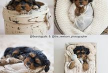 Puppy new born photography