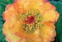 Fluffy Flowers / by Gypsy Thread ~ Carey