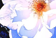 watercolour single rose