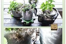 I Plant / by Meghan Sheil