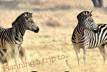 Family Travel | South Africa With Kids
