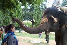 Mysore Palace - Elephant Ride