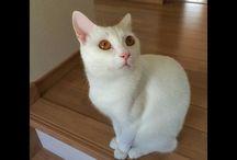 いいとこの猫っぽく撮れた。v(^^ I could be take our cat handsome. ;) #cat #whitecat #猫 #うちの猫写真