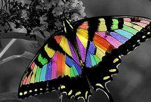 papillons / Papillons et libellules