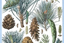 Botanical Illustrations / by Dick Williams
