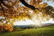 My Autumn My Fall