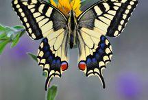 Butterfly *.*