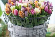 Flowers!!!