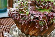 succulents & rock gardens