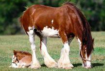 Horses / by Kelsie Mastin