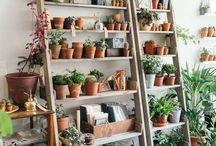 Plant Shop Ideas