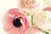 Floral / by Lauren Hink