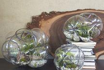 Terrariums | Indoor Plant Life