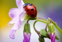 Ladybugs  / by ET Vegan Is My Way