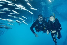 Underwater Australia / My favourite snaps of the Great Barrier Reef