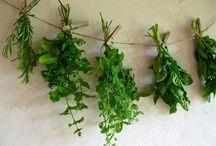 Dried ...Frozen.. fresh herbs!