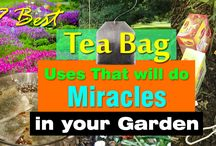 Tea bags for Plants