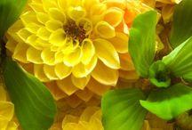 Pasta de flores dahlia
