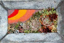 Suculentas em areia colorida
