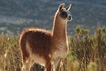 Animalia / Biodiversidad. Noticias, imágenes, eventos, info.