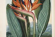botanic and nature illustration