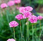Garden Ideas / by Kathy Christie
