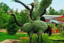 ✿ Topiary Art ✿