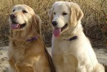 Dogs / Our faithful, furry, four-legged best friends!!! / by Donna Saxe