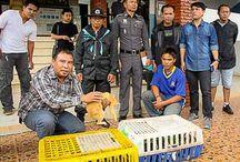 Nu ook Thaise kattensmokkelaars gepakt