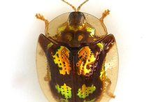 Insects / by Vanessa Senyk