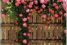 Ideas for My Future Garden