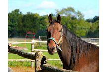 Salud equinos