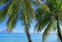 Hawaii / All things Hawaii / by WBWarriorLibrarian
